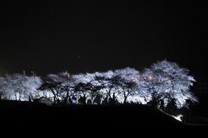 夜桜ライトアップ_2