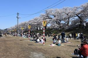 おおがわら桜まつり (2).jpg